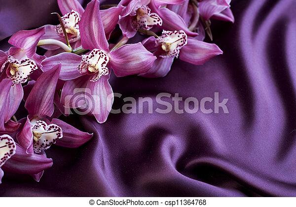 orchid., jedwab, copyspace - csp11364768