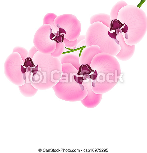 Orchid on a white background - csp16973295