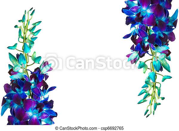 orchid  - csp6692765