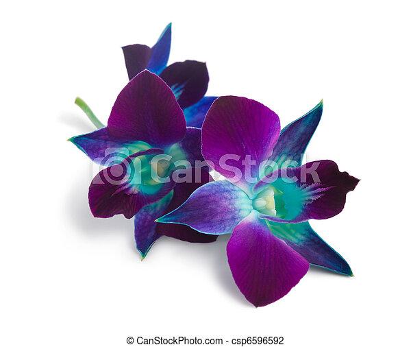 orchid  - csp6596592