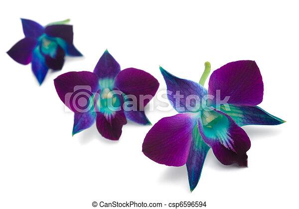orchid  - csp6596594