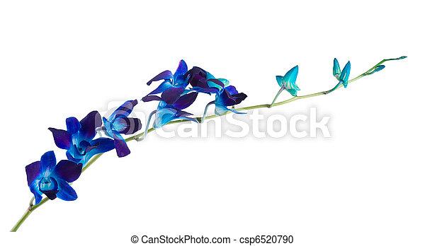 orchid - csp6520790