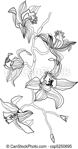 orchidee - csp5250695