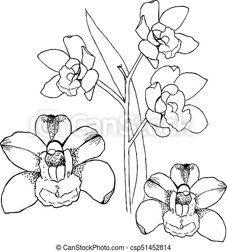 Orchids by hand drawing. Liner vector illustration on white - csp51452814