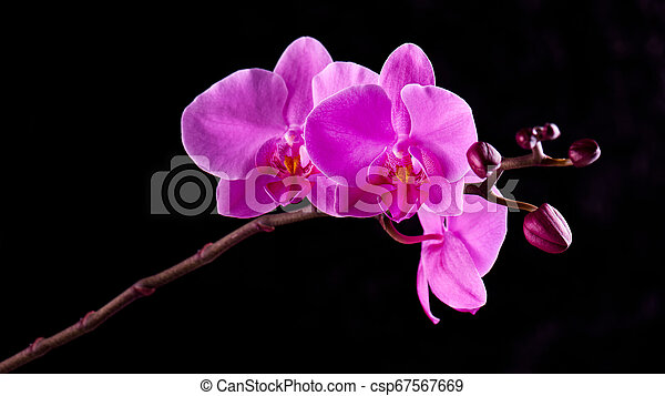 Orchids Flowers On Banch On Black Orchids Flowers On Banch On