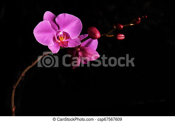 Orchids Flowers On Banch On Black Background Selective Focus