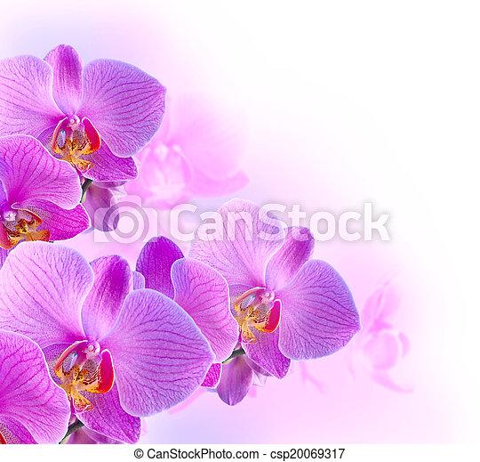 Orchids - csp20069317