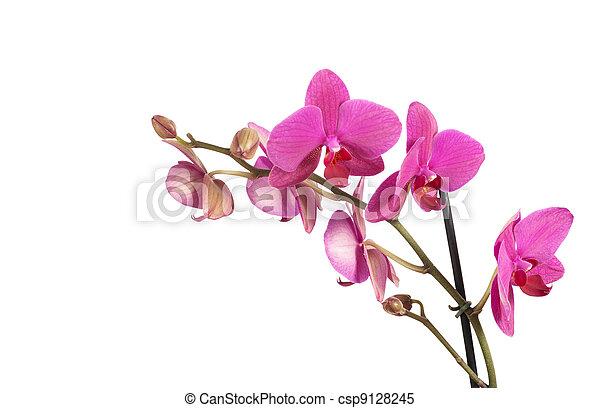orchids - csp9128245