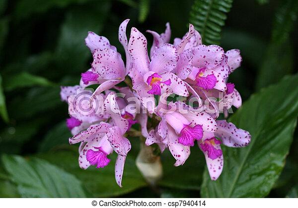 Orchids - csp7940414
