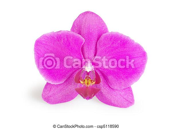 orchids  - csp5118590