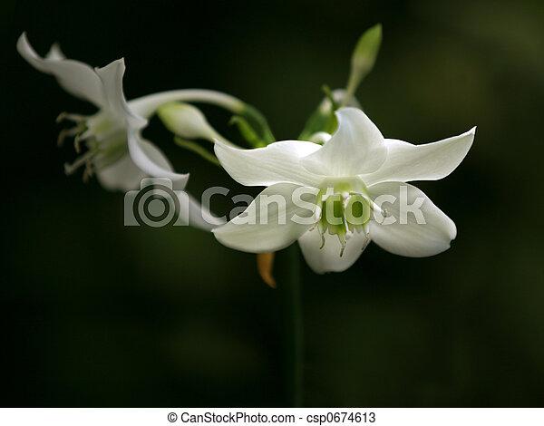 Orchids - csp0674613