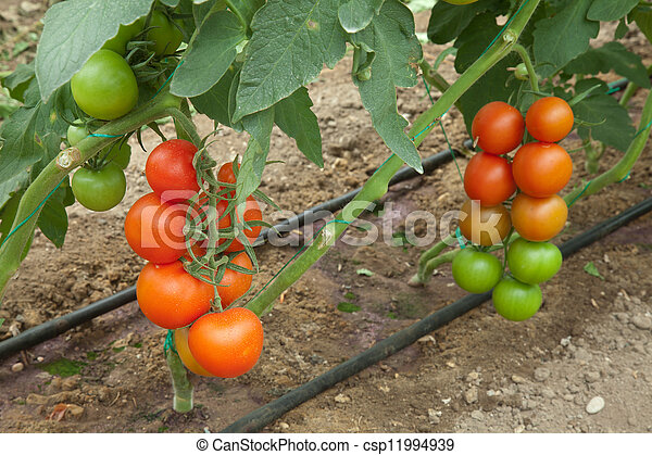 organic agriculture - csp11994939