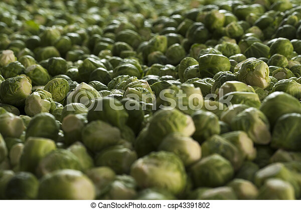 Organic Brussels sprouts on a farm stand - csp43391802