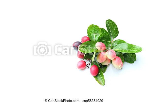 Organic carissa carandas fruits on white backgorund - csp58384929