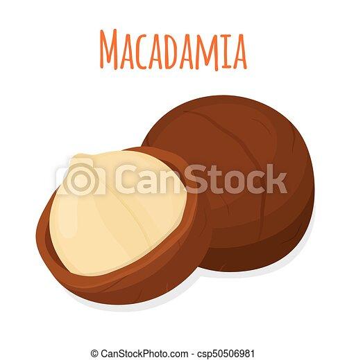 Organic macadamia, nutrition nut, oil ingredient. Flat style. Vector illustration - csp50506981