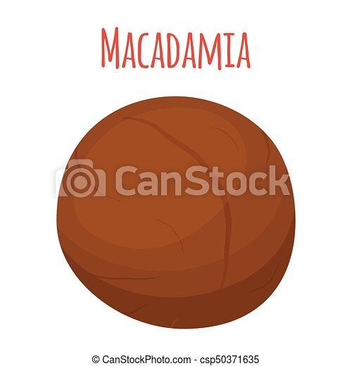Organic macadamia, nutrition nut, oil ingredient. Flat style. Vector illustration - csp50371635