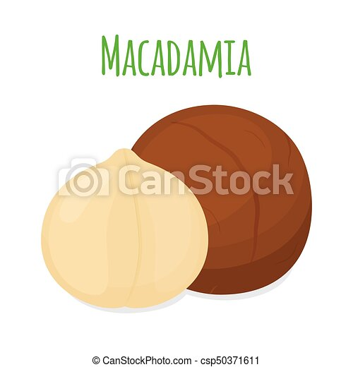 Organic macadamia, nutrition nut, oil ingredient. Flat style. Vector illustration - csp50371611