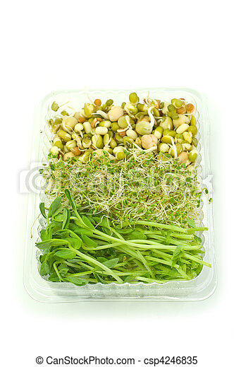 Organic sprouts - csp4246835