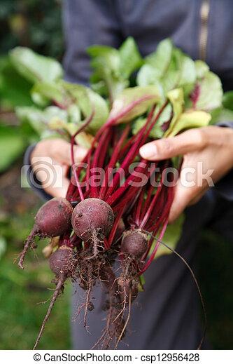 Organic vegetables - csp12956428