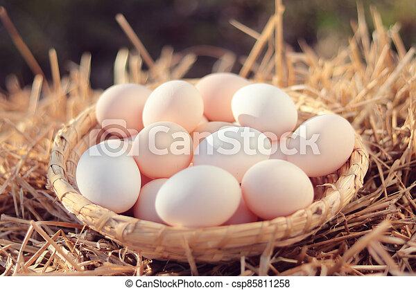 organický, proutěný, vejce, koš - csp85811258