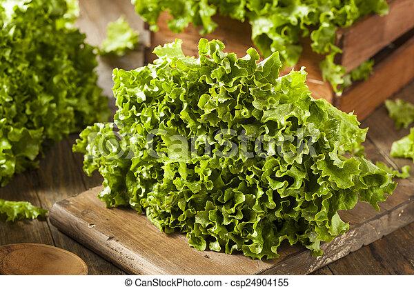 organisch, gezonde , sla, groene, fris, blad - csp24904155