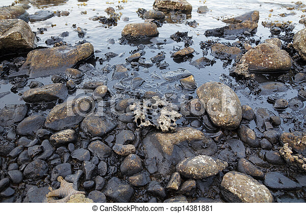 Caída de aceite en la orilla del mar - csp14381881
