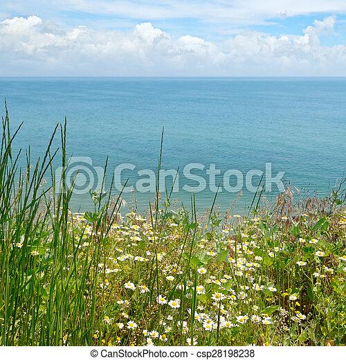 Camomila en la costa del mar - csp28198238