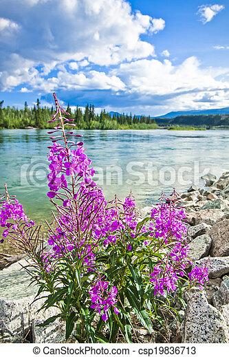 En la orilla del río Yukon - csp19836713