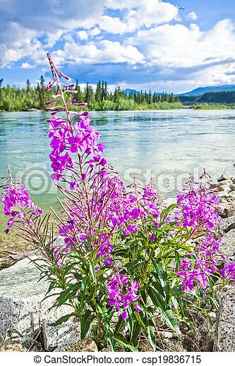 En la orilla del río Yukon - csp19836715
