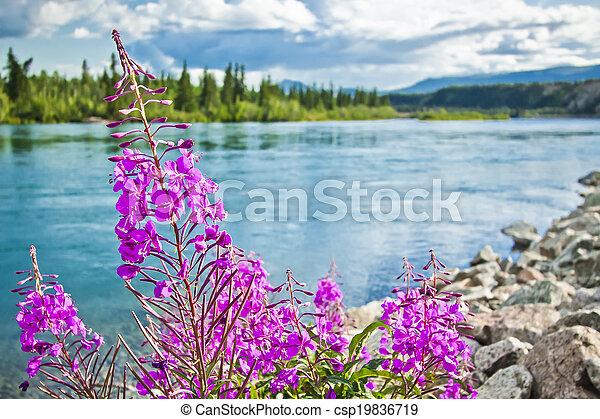 En la orilla del río Yukon - csp19836719