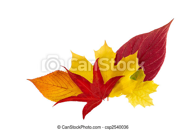 Ornamental bunch of autumn leaves - csp2540036