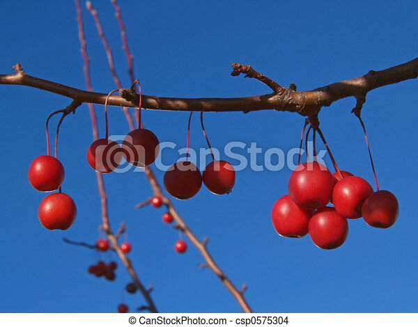 Ornamental Crabapple - csp0575304