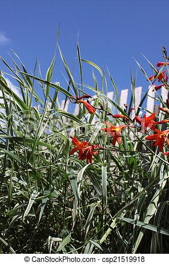 Ornamental Grasses - csp21519918