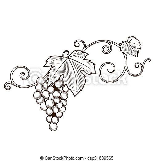 Vector de ornamento de ramas de uva - csp31839565