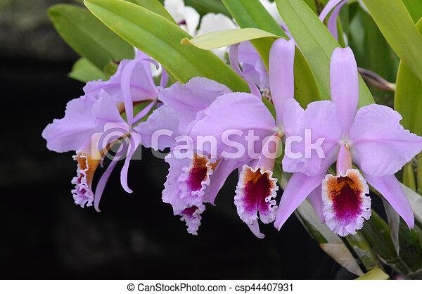 Orquídea - csp44407931