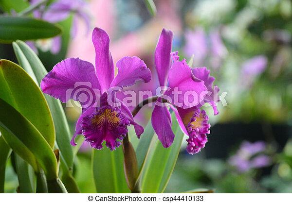Orquídea - csp44410133