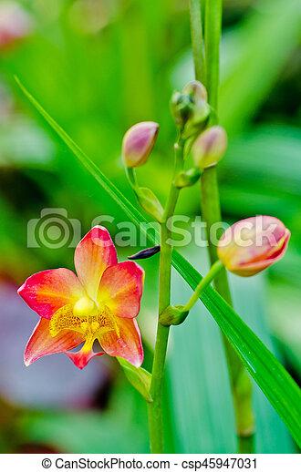 Orquídea - csp45947031
