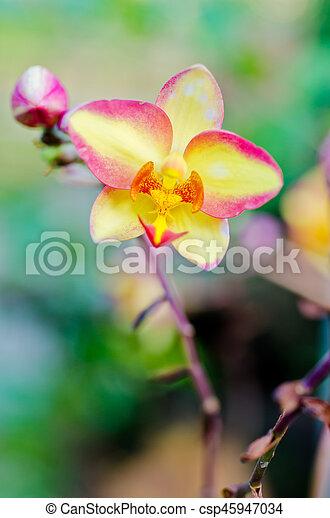Orquídea - csp45947034