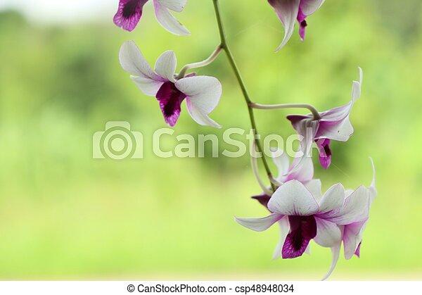 Orquídea - csp48948034