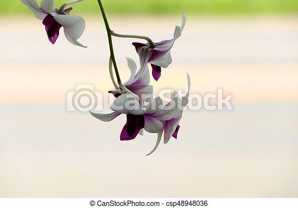 Orquídea - csp48948036