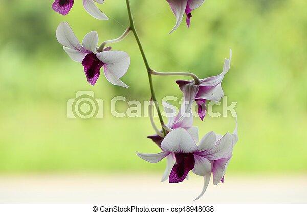 Orquídea - csp48948038