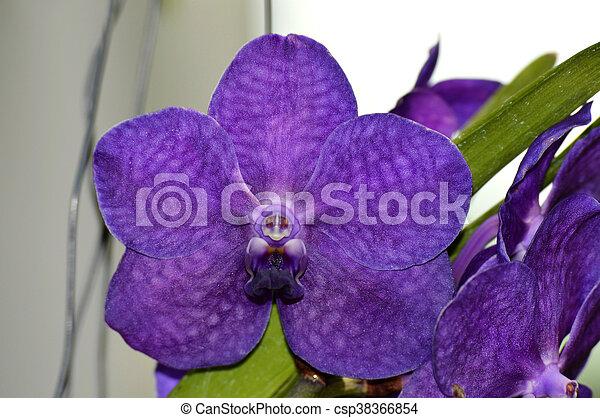 Orquídea - csp38366854