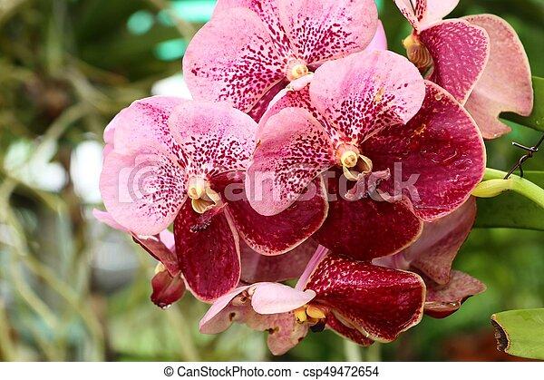 Orquídea - csp49472654