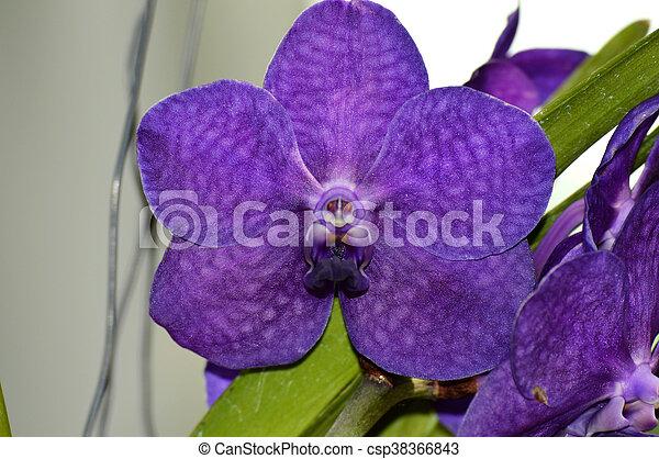 Orquídea - csp38366843