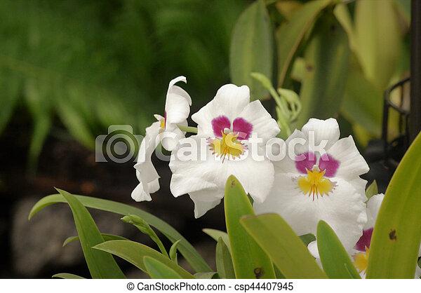 Orquídea - csp44407945