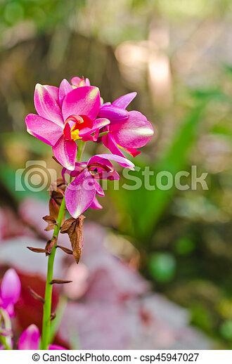 Orquídea - csp45947027