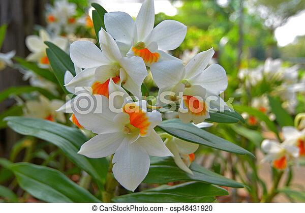 Orquídea - csp48431920
