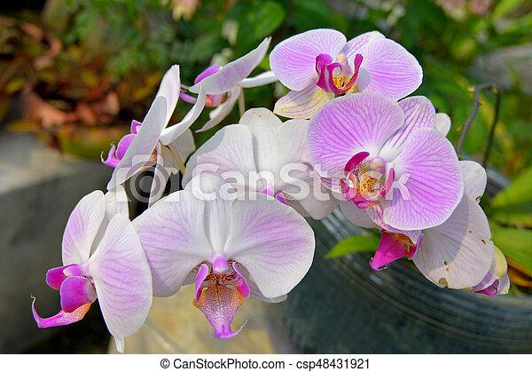 Orquídea - csp48431921