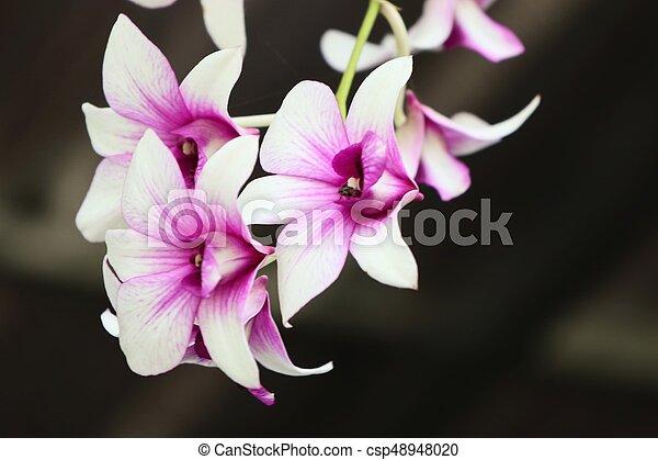 Orquídea - csp48948020