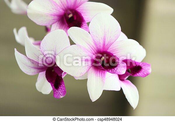 Orquídea - csp48948024